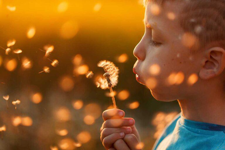 Little boy blowing dandelion summer sunset